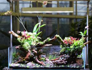 30F  [Gallery] Workshop Aquarium setup A - Z by Roberto Bielli 30F
