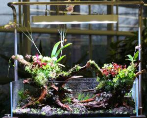 31F  [Gallery] Workshop Aquarium setup A - Z by Roberto Bielli 31F