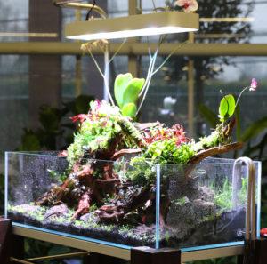 32F  [Gallery] Workshop Aquarium setup A - Z by Roberto Bielli 32F