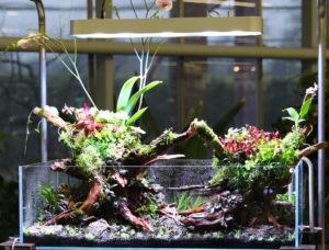 33F  [Gallery] Workshop Aquarium setup A - Z by Roberto Bielli 33F