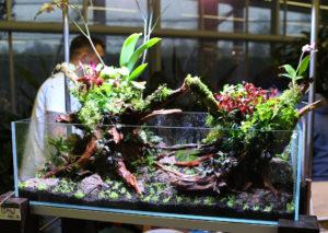 34F  [Gallery] Workshop Aquarium setup A - Z by Roberto Bielli 34F