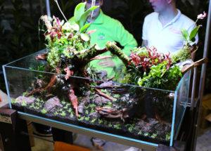 36F  [Gallery] Workshop Aquarium setup A - Z by Roberto Bielli 36F